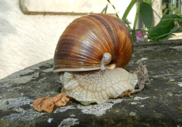 coquille-stop--3-.JPG