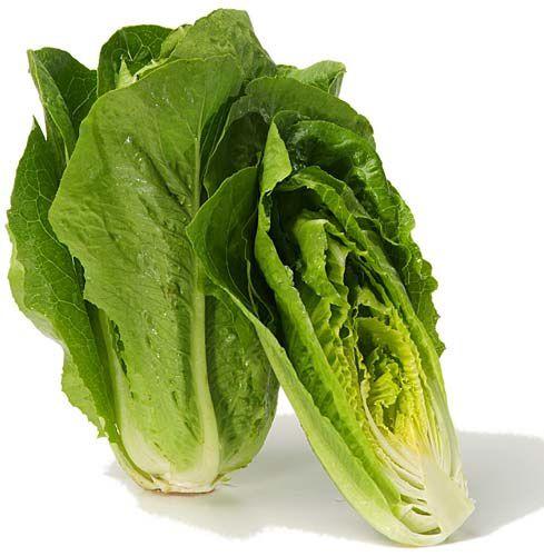 salade_laitue_romaine.jpg