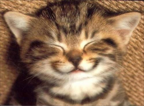 chat-sourire.jpg