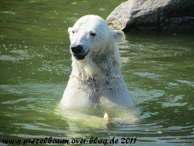 Katjuscha20110426 021