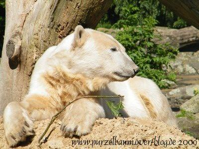 Knut20090613-044.jpg