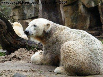 Knut20091012 006