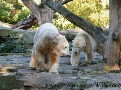 Knut20091014-012.jpg