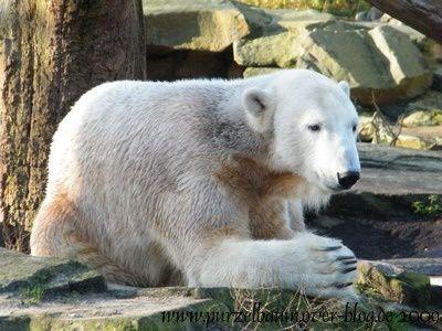 Knut20091125-021.jpg