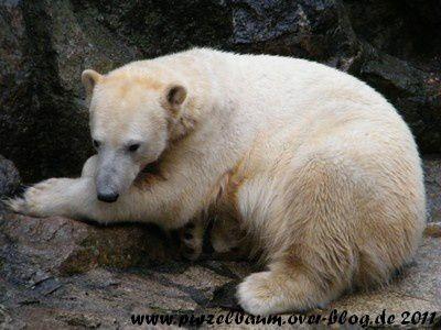 Knut20110206 012