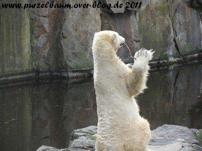 Knut20110214 023