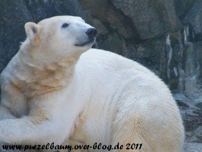 Knut20110319 034