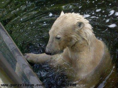 Knut20080601 020