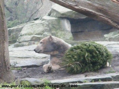 Knut20081217 045