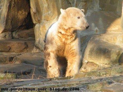 Knut20081230 004