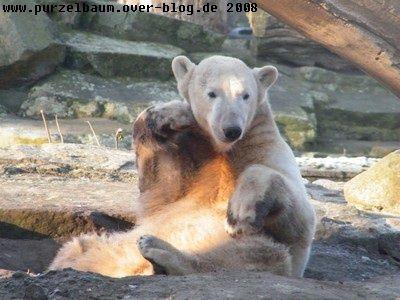 Knut20081230 017