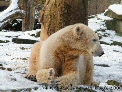 Knut20090103-014.jpg