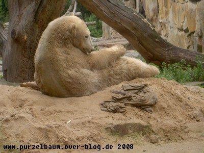 Knut20080906 063