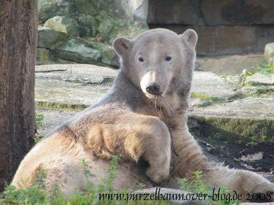 Knut20081116-162.jpg