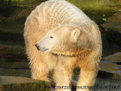 Knut20081222 121