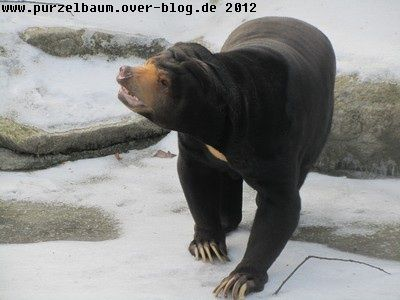 Malaienbär20120216 016