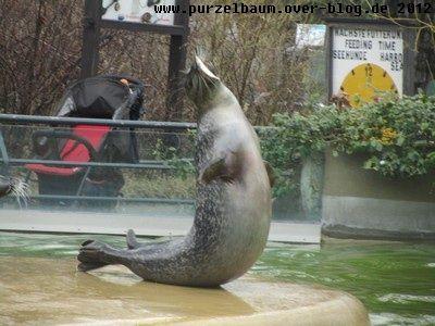 Seehund20120314 012