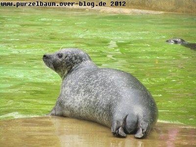 Seehund20120424 017