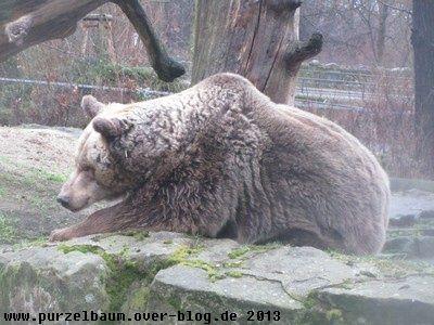 Braunbär20130106 042