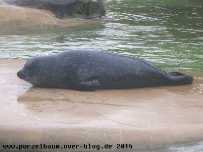 Seehund20140106 025