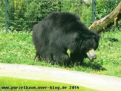 Lippenbär20140719 051