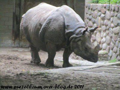 Panzernashorn20110725 017