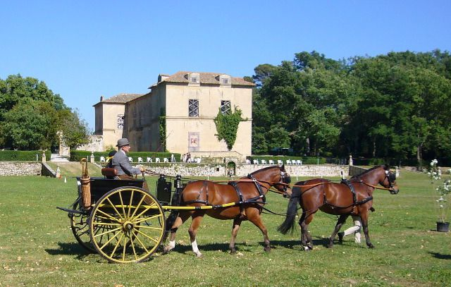 """Photos en lien avec l'article""""Concours attelage de tradition Aix en provence 2010"""""""