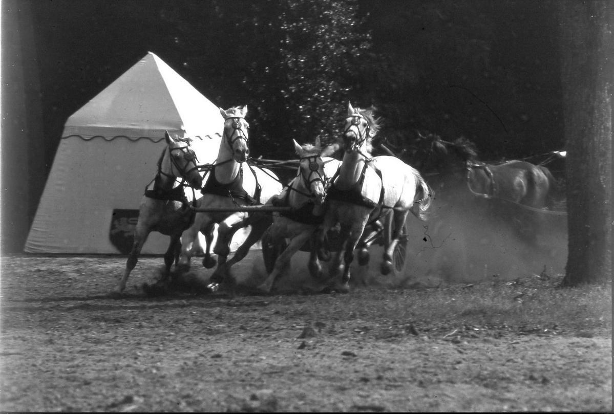 Spectacles de chars romains dans les années1980.Equipe du centre équestre d'attelage en gironde.Amical remerciement au photographe Thierry Méar pour ses photos