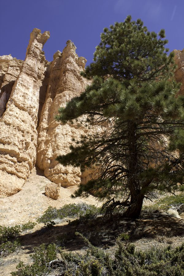 Bryce-Canyon 2759