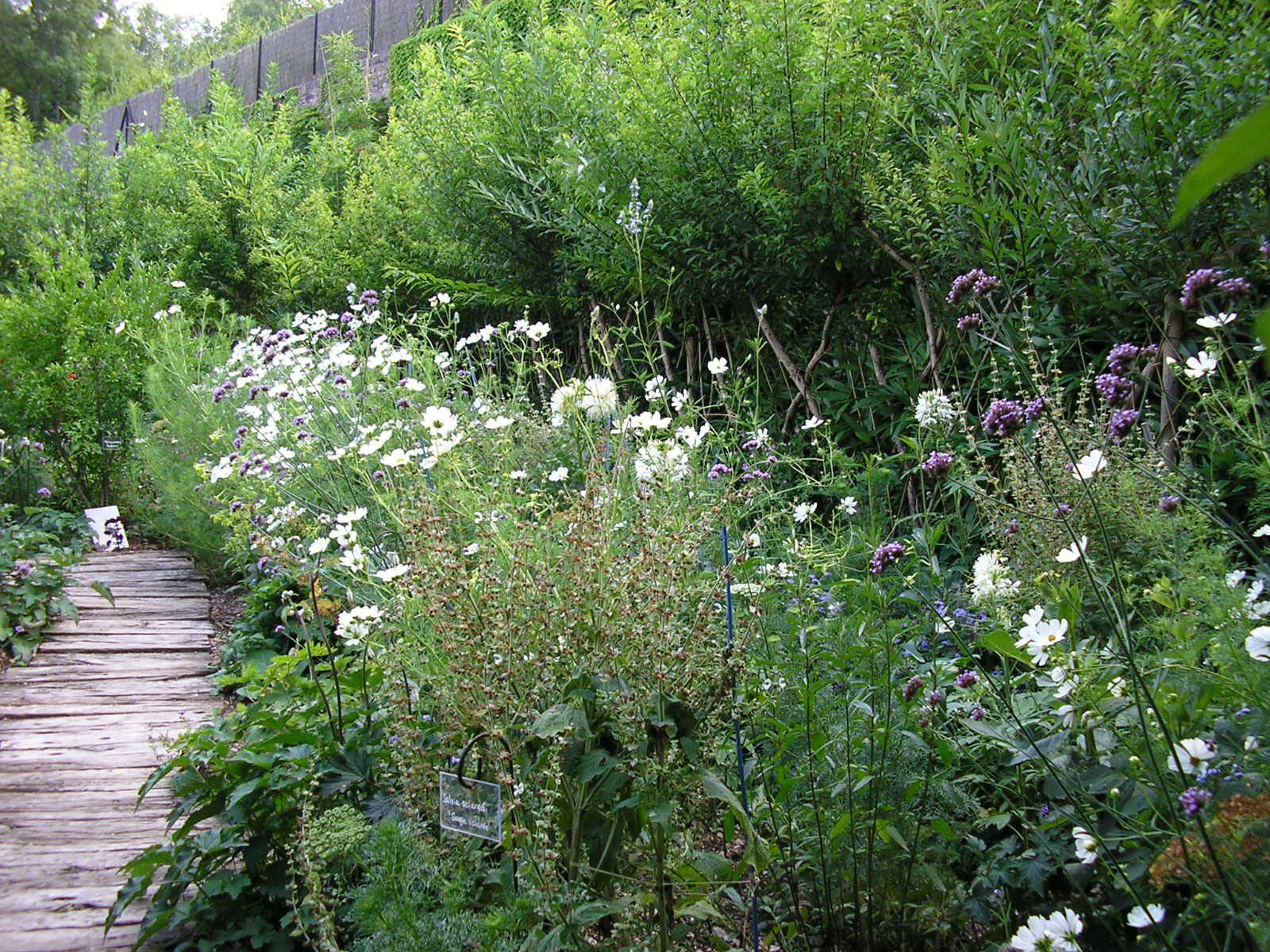 Album jardin du Paradis CORDES sur ciel Le Jardin des Cistes