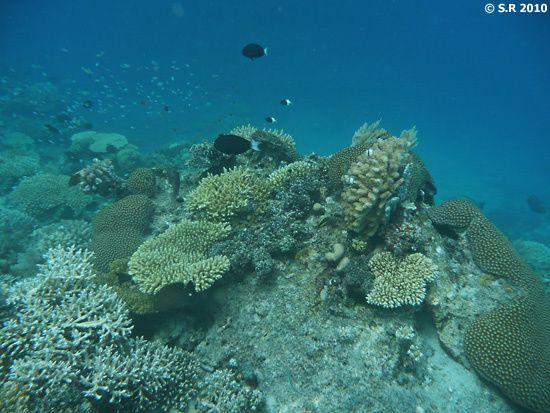 Récif corallien de l'île de Mohéli