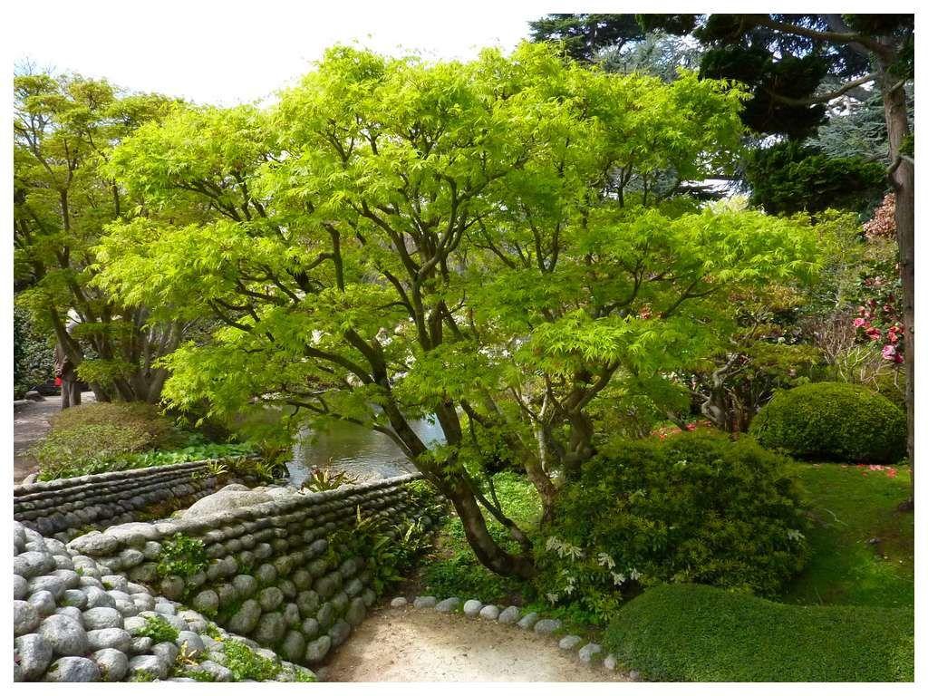 Jardin albert kahn nos jardins et nos balades for Albert kahn jardin