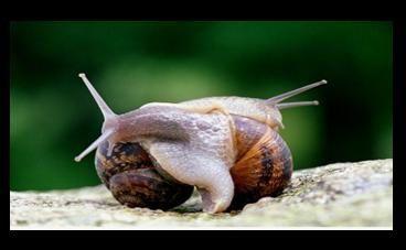 escargot-rigolo-2.jpg