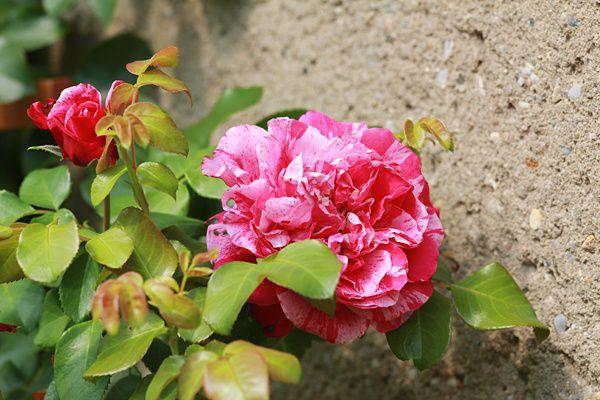 Garten2-0383.jpg