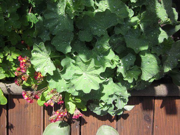 Garten2-7102.jpg