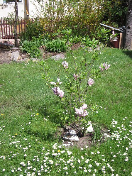 Garten2-7104.jpg