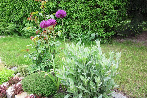 Garten2-8749.jpg