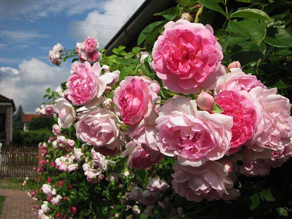 Garten2-9817.jpg