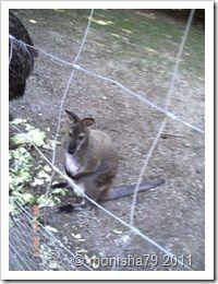 Outback Farschweiler 29.05 (15)