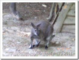 Outback Farschweiler 29.05 (18)