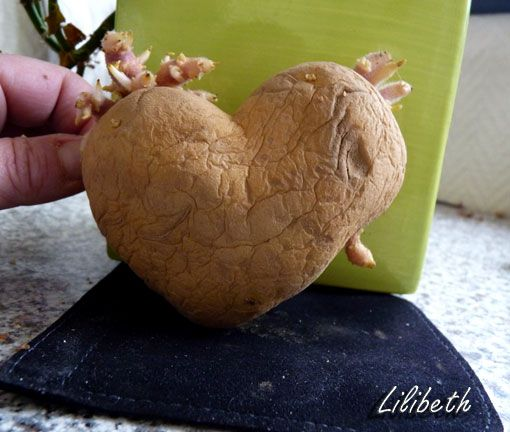 coeur patate
