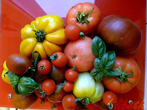 collection_tomates.jpg