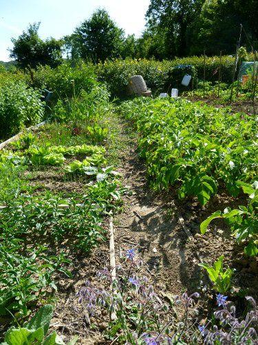 jardin_2011_3.jpg