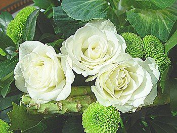 3-roses-blanches.JPG