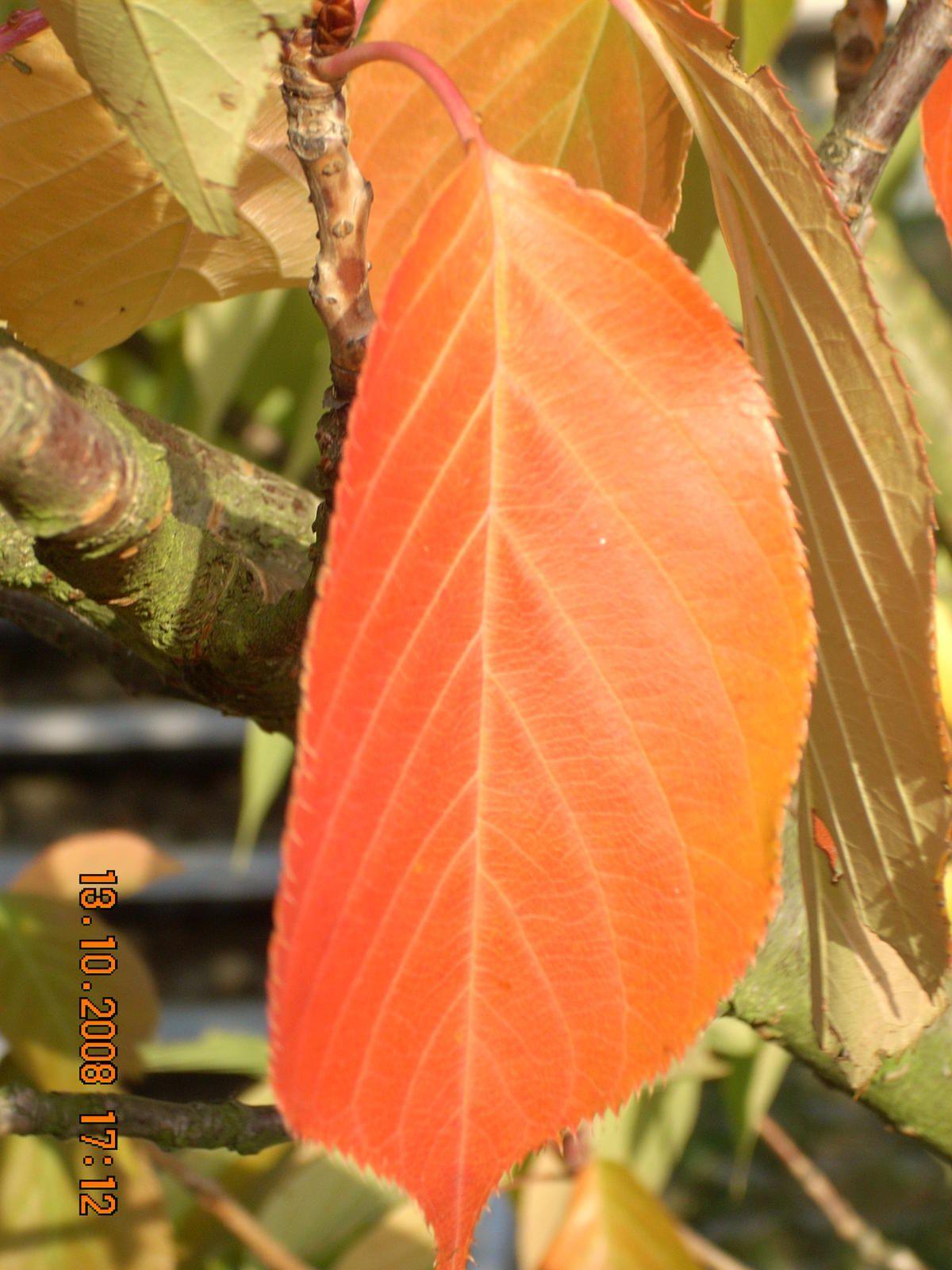 Natur : Herbstfarben