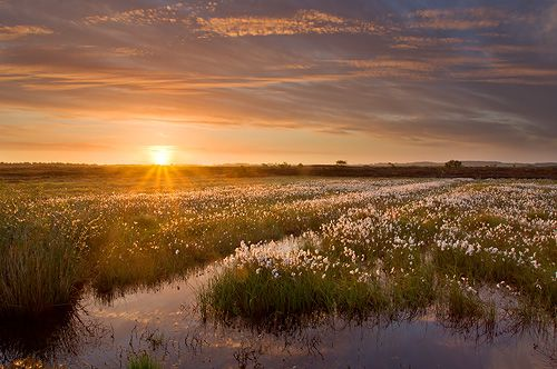 ballynahone-bog-at-dawn3.jpg