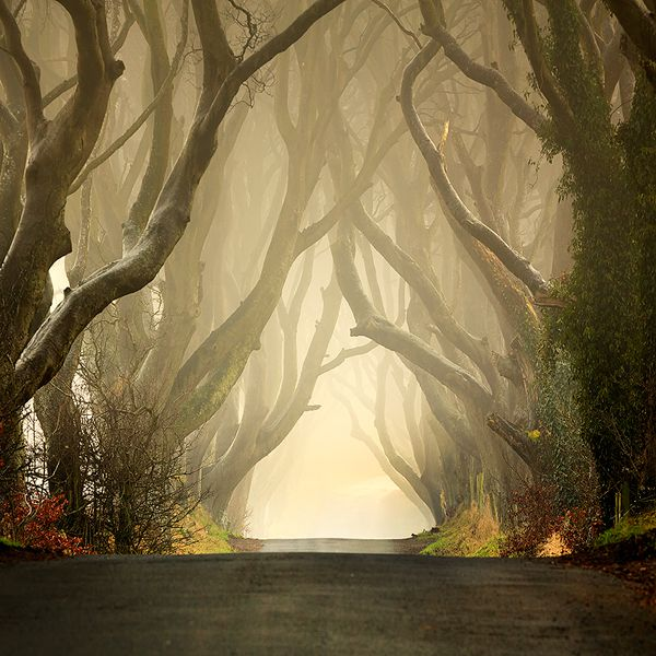 dark-hedges.jpg