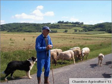 pastoralisme_chambagri_sign.png