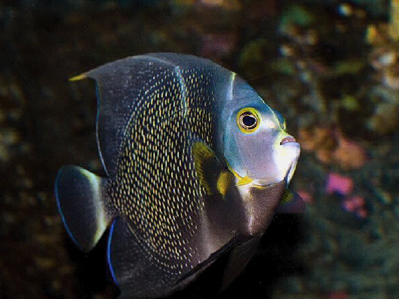 mer-3.png