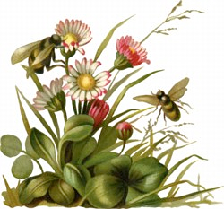 bees-flowers.png